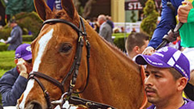 Dayatthespa Race Horse