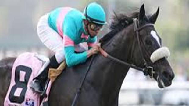 Zenyatta Race Horse