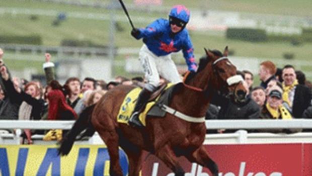 Cheltenham Horse