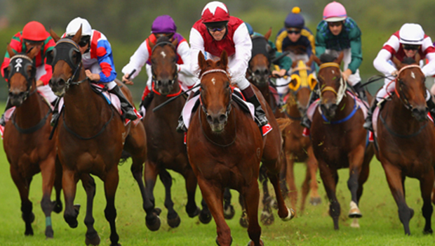 Understanding Horse Betting