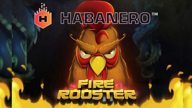 Fire Rooster: Latest game from the developer Habanero