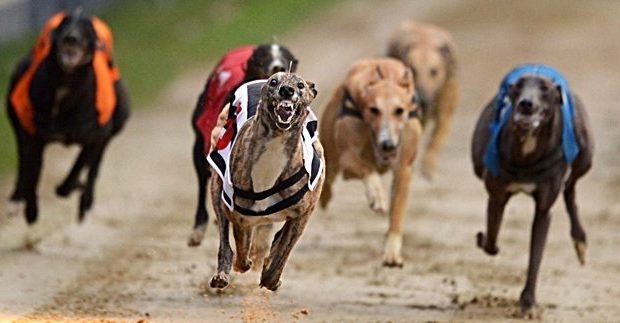 What You Don't Know About UK Dog Racing Could Be Costing to More Than You Think