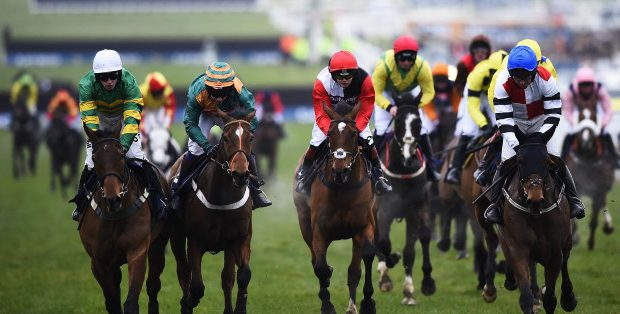 Horse racing business counts £150m charge of equine flu with Cheltenham festival weeks away