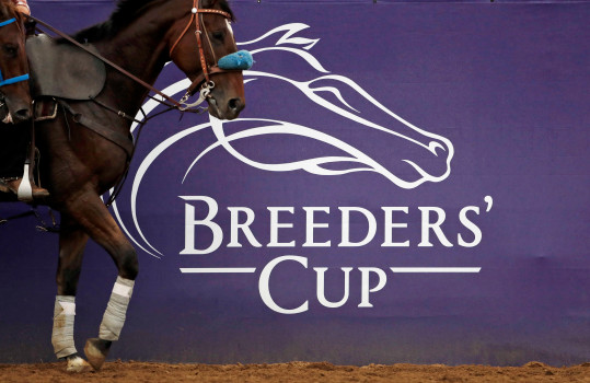 Line of Duty Suffers Fatal Injury Ahead Of Breeders' Cup