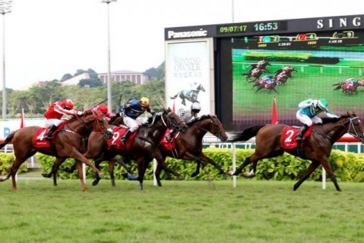 Horse Racing Betting Shows