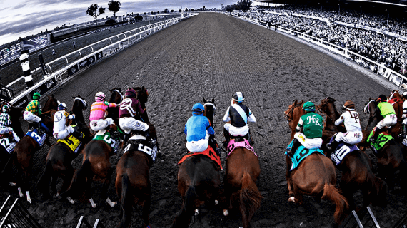 Understanding What Horse Betting Is All About