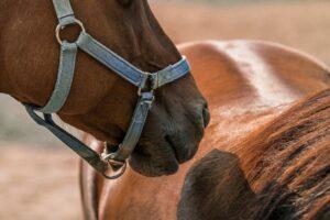 Horse racing in Japan